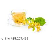 Купить «Чай из цветов липы в стеклянной чашке на белом фоне», фото № 28209488, снято 19 июля 2017 г. (c) Алёшина Оксана / Фотобанк Лори