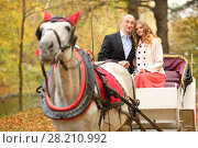 Купить «Man and woman sit in coach with horse and hold reins in autumn park», фото № 28210992, снято 10 октября 2016 г. (c) Losevsky Pavel / Фотобанк Лори