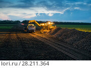 Купить «Machine loads of sugar beet into trucks collected from fields at evening», фото № 28211364, снято 18 августа 2015 г. (c) Losevsky Pavel / Фотобанк Лори