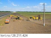 Купить «KRASNODAR REGION, RUSSIA - AUG 19, 2015: Machine loads of sugar beet into orange truck and harvester arrives, In 2015 in Krasnodar region have collected record grain harvest - 102 million tons of grain», фото № 28211424, снято 19 августа 2015 г. (c) Losevsky Pavel / Фотобанк Лори