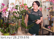 Купить «woman choosing potted phalaenopsis», фото № 28219616, снято 14 декабря 2019 г. (c) Яков Филимонов / Фотобанк Лори
