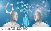 Купить «Clone twin 3D men with genetic DNA», фото № 28220960, снято 21 апреля 2019 г. (c) Wavebreak Media / Фотобанк Лори
