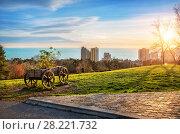 Купить «Вид на Черное море и телегу View of the Black Sea in Sochi and a wooden cart», фото № 28221732, снято 20 января 2018 г. (c) Baturina Yuliya / Фотобанк Лори