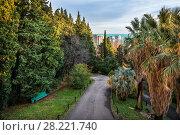 Купить «Дорога в дендрарии Sochi through the tall evergreen trees of the arboretum», фото № 28221740, снято 20 января 2018 г. (c) Baturina Yuliya / Фотобанк Лори