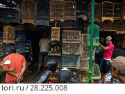 Купить «Cages of birds for sale in Denpasar Animal Market, Bali.», фото № 28225008, снято 20 июня 2018 г. (c) Nature Picture Library / Фотобанк Лори