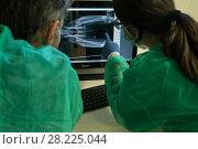 Купить «X-ray of Iberian lynx (Lynx pardinus) cub examined by vets, Zarza de Granadilla Iberian lynx breeding centre, Extremadura, Spain October.», фото № 28225044, снято 19 июля 2018 г. (c) Nature Picture Library / Фотобанк Лори