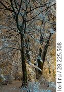 Купить «Big snow-covered trees in night winter Ivan Franko park in Lviv, Ukraine», фото № 28225508, снято 10 декабря 2017 г. (c) Юрий Брыкайло / Фотобанк Лори