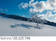 Купить «Winter hoar frosting trees, tower and snowdrifts (Carpathian mountain, Ukraine)», фото № 28225748, снято 23 января 2018 г. (c) Юрий Брыкайло / Фотобанк Лори