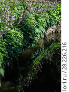 Купить «Small summer lake surface with flower plants reflections», фото № 28226216, снято 30 июля 2017 г. (c) Юрий Брыкайло / Фотобанк Лори