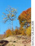 Купить «Autumn Carpathian mountains, Ukraine», фото № 28226308, снято 18 октября 2017 г. (c) Юрий Брыкайло / Фотобанк Лори