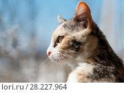 Купить «Portrait of a color cat», фото № 28227964, снято 16 марта 2018 г. (c) Владимир Иванов / Фотобанк Лори