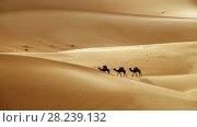 Camel caravan in desert sand dunes. Стоковое фото, фотограф Михаил Коханчиков / Фотобанк Лори