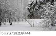 Купить «spruce in snow Against house in Moscow, Russia.», видеоролик № 28239444, снято 31 января 2018 г. (c) Володина Ольга / Фотобанк Лори