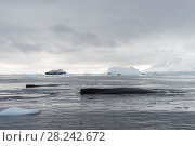 Купить «Humpback Whale logging», фото № 28242672, снято 10 марта 2018 г. (c) Vladimir / Фотобанк Лори