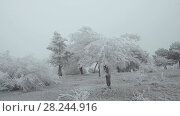 Купить «Snow-covered mountain glade. Windy and foggy weather. The trees and shrubs are covered with a thick layer of frost.», видеоролик № 28244916, снято 24 марта 2018 г. (c) Андрей Радченко / Фотобанк Лори