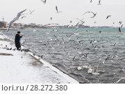 Купить «Старушка кормит зимующих лебедей на набережной Терешковой в городе Евпатории», фото № 28272380, снято 28 февраля 2018 г. (c) Николай Мухорин / Фотобанк Лори