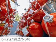 Купить «Cylinders for compressed gas.», фото № 28276040, снято 19 октября 2016 г. (c) Андрей Радченко / Фотобанк Лори