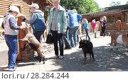 Купить «Дети кормят коз в контактном зоопарке. Санкт-Петербург», видеоролик № 28284244, снято 8 февраля 2018 г. (c) Кекяляйнен Андрей / Фотобанк Лори