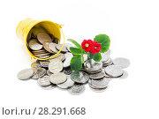Купить «Денежное плодородие. Цветущий каланхоэ и много монет на белом фоне», фото № 28291668, снято 11 апреля 2018 г. (c) Наталья Осипова / Фотобанк Лори