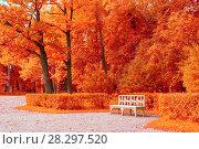 Купить «Autumn colorful landscape. Wooden white bench in the autumn park under yellowed autumn trees», фото № 28297520, снято 21 сентября 2017 г. (c) Зезелина Марина / Фотобанк Лори