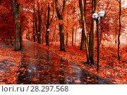 Купить «Осенний пейзаж. Осенняя аллея после дождя», фото № 28297568, снято 6 октября 2017 г. (c) Зезелина Марина / Фотобанк Лори