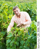 Купить «Portrait of male farmer near grapes in vineyard», фото № 28306708, снято 22 сентября 2016 г. (c) Яков Филимонов / Фотобанк Лори