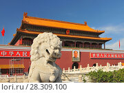 Купить «A Lion Statue Guarding The Entrance to the Forbidden City with a portrait of Mao Zedong in the background in Tiananmen Square Beijing China», фото № 28309100, снято 23 мая 2019 г. (c) BE&W Photo / Фотобанк Лори