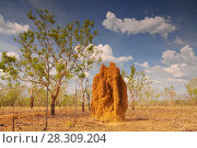Купить «Massive cathedral termite mounds (Nasutitermes triodae), Kakadu National Park, Northern Territory, Australia», фото № 28309204, снято 20 июля 2019 г. (c) BE&W Photo / Фотобанк Лори