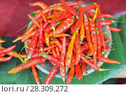 Купить «Yellow and red chile peppers on the market in San Cristobal de las Casas, Chiapas, Mexico», фото № 28309272, снято 19 июня 2019 г. (c) BE&W Photo / Фотобанк Лори
