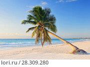 Купить «Paradise beach with beautiful palm tree, Riviera Maya, Caribbean sea in Mexico», фото № 28309280, снято 11 декабря 2019 г. (c) BE&W Photo / Фотобанк Лори