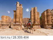 Купить «Camels crossing Themenos Gate and colonnaded street in Petra, Jordan», фото № 28309404, снято 23 августа 2019 г. (c) BE&W Photo / Фотобанк Лори