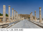 Купить «Ruins of the Roman Byzantine city Scythopolis, Tel Beit Shean National Park, Israel», фото № 28309440, снято 20 сентября 2019 г. (c) BE&W Photo / Фотобанк Лори