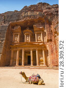 Купить «Camel used by local guides for tourists entertainment and transport in front of the Treasury, a famous landmark in Petra, Jordan», фото № 28309572, снято 20 апреля 2019 г. (c) BE&W Photo / Фотобанк Лори