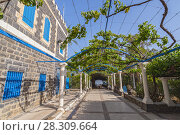 Купить «The vine garden patio at the Greek Orthodox Church of the Seven Apostles near Capernaum, Israel, Holy and, Middle East», фото № 28309664, снято 24 января 2019 г. (c) BE&W Photo / Фотобанк Лори