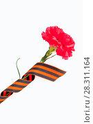 Купить «9 мая - красная гвоздика и Георгиевская лента на белом фоне изолированно», фото № 28311164, снято 7 апреля 2017 г. (c) Зезелина Марина / Фотобанк Лори