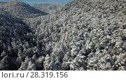 Купить «Winter landscape with pine forest in the snow at sunny frozen day», видеоролик № 28319156, снято 26 февраля 2018 г. (c) Яков Филимонов / Фотобанк Лори