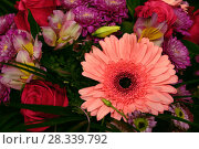 Купить «fragment of bouquet with gerbera close-up», фото № 28339792, снято 1 октября 2016 г. (c) Володина Ольга / Фотобанк Лори