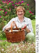 Купить «retiree gardener basket», фото № 28340376, снято 27 июня 2019 г. (c) Яков Филимонов / Фотобанк Лори