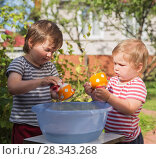 Купить «Two small boys help to wash dishes outdoors in village, in country», фото № 28343268, снято 9 августа 2017 г. (c) Юлия Бабкина / Фотобанк Лори
