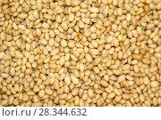 Купить «Background - golden kernels of peeled pine nuts», фото № 28344632, снято 26 апреля 2018 г. (c) Евгений Харитонов / Фотобанк Лори
