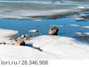 Купить «Чайка на кане среди льдин. Финский залив. Петергоф», эксклюзивное фото № 28346908, снято 14 апреля 2018 г. (c) Александр Щепин / Фотобанк Лори
