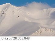 Купить «Griffon vulture (Gyps fulvus) soaring above snowy peak of Mount Velino. Abruzzo, Central Apennines, Italy, March.», фото № 28355848, снято 23 мая 2018 г. (c) Nature Picture Library / Фотобанк Лори