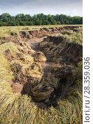Купить «Large gully cut into field created by water from the River Wear after the river burst its banks, Durham, England, UK, July.», фото № 28359036, снято 17 июля 2018 г. (c) Nature Picture Library / Фотобанк Лори