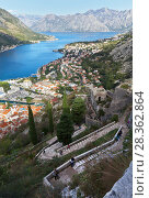 Купить «Montenegro. Kotor. Tourists travel through ancient defensive structures along the stone stairs of the Old Town Road to the Fortress of Saint Ivan on the mountain above the beautiful old town and Kotor Bay», фото № 28362864, снято 8 октября 2016 г. (c) Виктория Катьянова / Фотобанк Лори