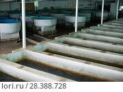 Купить «Tanks and incubators on fish farm», фото № 28388728, снято 4 февраля 2018 г. (c) Яков Филимонов / Фотобанк Лори