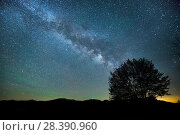 Купить «Milky Way over a tree, White Mountains, New Hampshire, USA, June 2015.», фото № 28390960, снято 21 мая 2018 г. (c) Nature Picture Library / Фотобанк Лори
