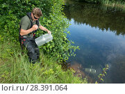 Купить «Environment Agency Fisheries Officer releasing Minnow traps from an irrigation pool, during national programme to eradicate Topmouth Gudgeon, Herefordshire, England, UK, July 2017.», фото № 28391064, снято 17 августа 2018 г. (c) Nature Picture Library / Фотобанк Лори