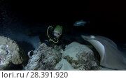 Купить «Female scuba diver looks at shark and ray at night. Tawny nurse sharks (Nebrius ferrugineus) and Pink whipray (Himantura fai), Indian Ocean, Maldives», видеоролик № 28391920, снято 25 марта 2018 г. (c) Некрасов Андрей / Фотобанк Лори