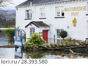 Купить «The Wateredge Inn surrounded by flood water after Lake Windermere burst its banks in Ambleside in the Lake District on Sunday 6th December 2015, after...», фото № 28393580, снято 17 июля 2018 г. (c) Nature Picture Library / Фотобанк Лори