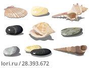 Seashell and sea pebbles. Стоковая иллюстрация, иллюстратор Александр Володин / Фотобанк Лори